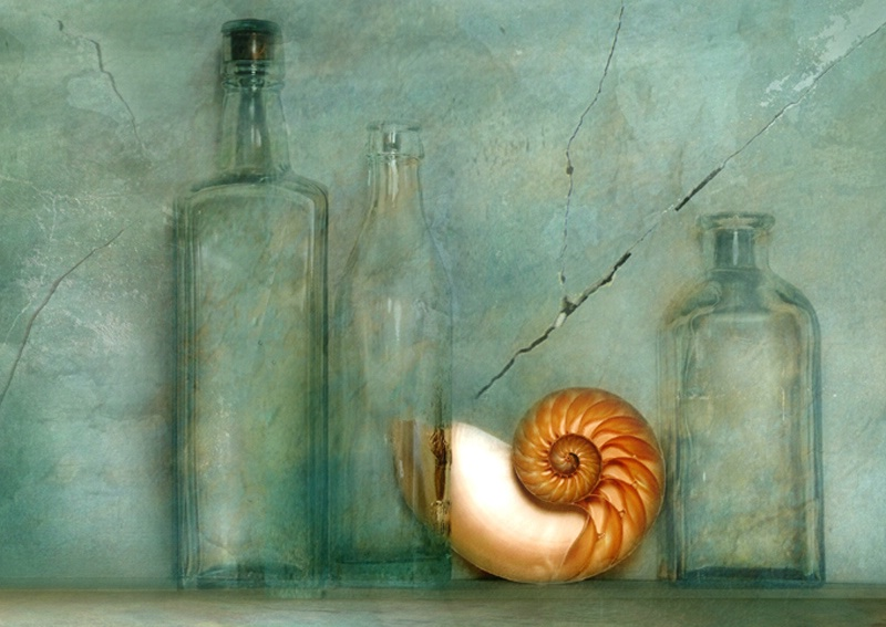 Bottles with shell