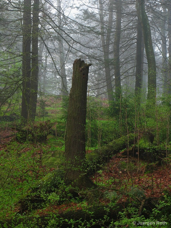 AA-041: Tree Stump - ID: 9130814 © Juergen Roth