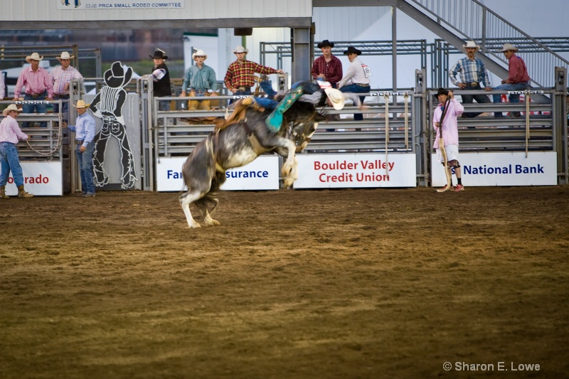 Rodeo, Estes Park, Colorado - ID: 9167894 © Sharon E. Lowe