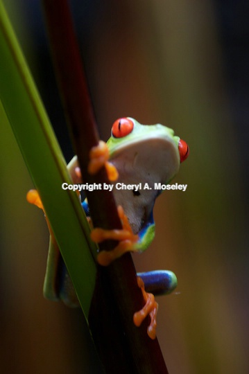 - ID: 9171807 © Cheryl  A. Moseley