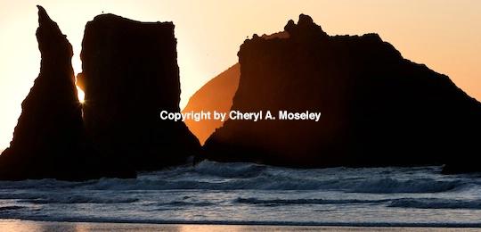 - ID: 9175255 © Cheryl  A. Moseley