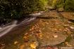 A Creek Runs Thro...