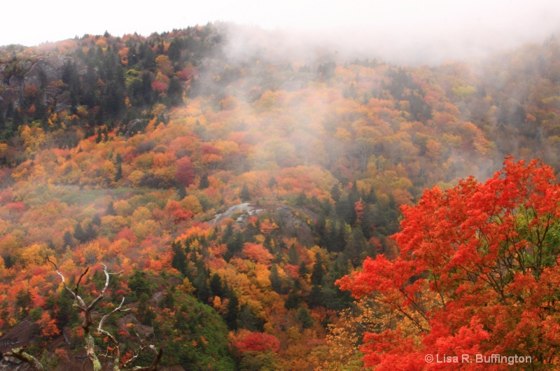 Fog Rolling in on the Parkway - ID: 9198010 © Lisa R. Buffington