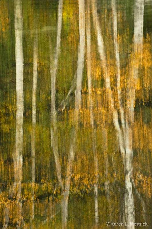 Birch Reflections - ID: 9200809 © Karen L. Messick