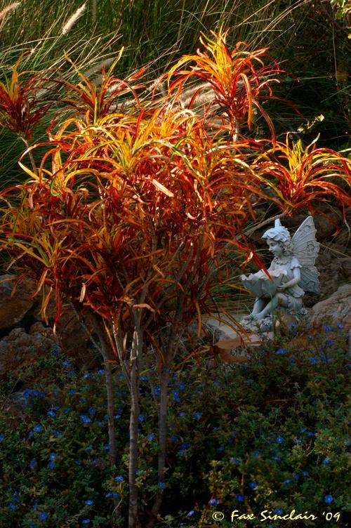 Garden Fairy 2  - ID: 9207112 © Fax Sinclair
