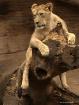 The Lion's Lo...