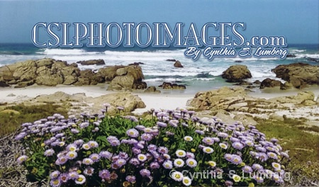 CSLPHOTOIMAGES.COM - ID: 9234502 © Cynthia S. Lumberg