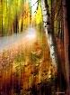 Autumn in Wiscons...