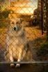 Puppy Next Door
