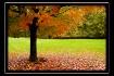 Autumn's Carp...