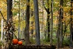Forest Pumpkins