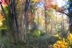 Fall Is A Palett...