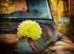~ Yellow and Rust...