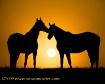 Sunrise Duet