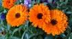 Orange beauties
