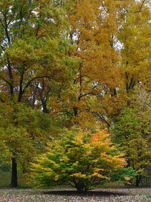 AA-053: Arnold Arboretum - ID: 9349075 © Juergen Roth