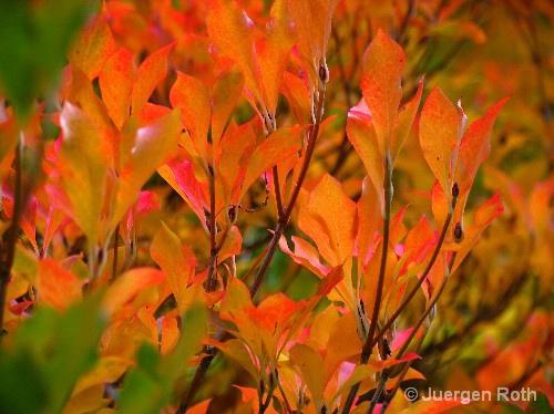 AA-056: Arnold Arboretum - ID: 9349080 © Juergen Roth