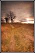 morning prairie t...