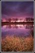 Purple morning po...