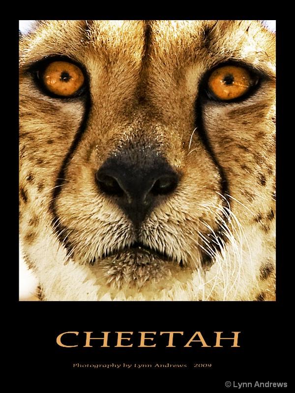 Cheetah - ID: 9419793 © Lynn Andrews