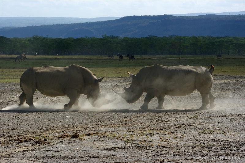 Rhino Challenge - ID: 9510046 © Kathryn R. Kilpatrick