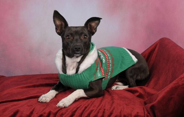 Trixie Christmas 2