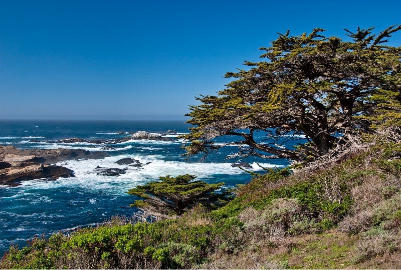 Point Lobos, CA - ID: 9554713 © Steve Abbett