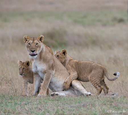Playful family