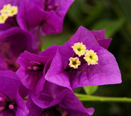 Purple Attention