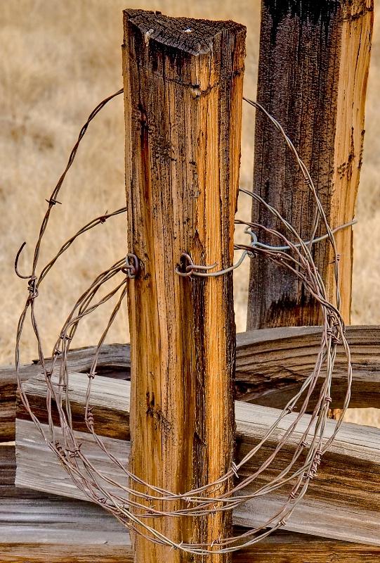 Don't fence me in! - ID: 9580449 © Steve Abbett