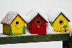 Birdhouses in Sno...