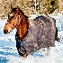 © James W. Betts PhotoID # 9594720: First snow