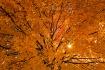 Autumnal Brillanc...