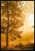 Mist & Tree