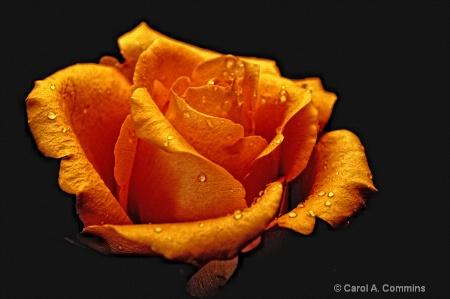 Orange Kiss