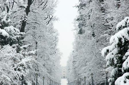 Snow in Maksimir