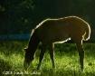 Sunlit Foal