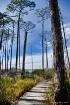Wetland Pathway