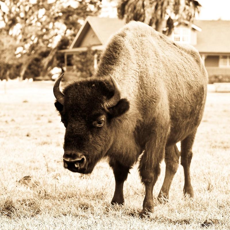 RIver Ranch - ID: 9678238 © Karen N. Smutz