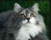 Kitty Watching th...