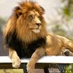 King on His Thron...