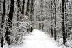 Surprise Snowstor...