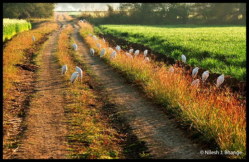 Sunbathing Herons
