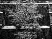 Snow New York
