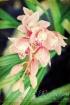 ~Vintage Orchid~