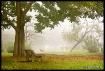 Tree & Bench