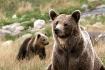 Mamma Bear on loo...