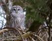 Bird Watcher !!