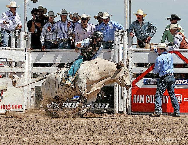 Out the gate on Unicorn - ID: 9796778 © Emile Abbott