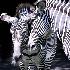 © Rochelle Berman PhotoID # 9829011: zebrapair
